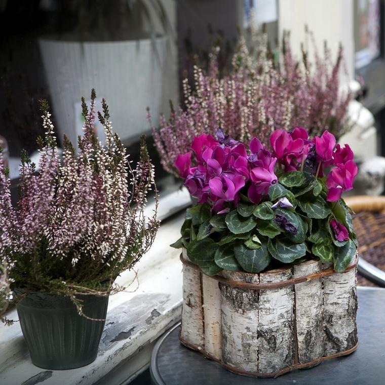 Naturalne Sposoby Pielegnowania Roslin Doniczkowych Plants Decor Lavender