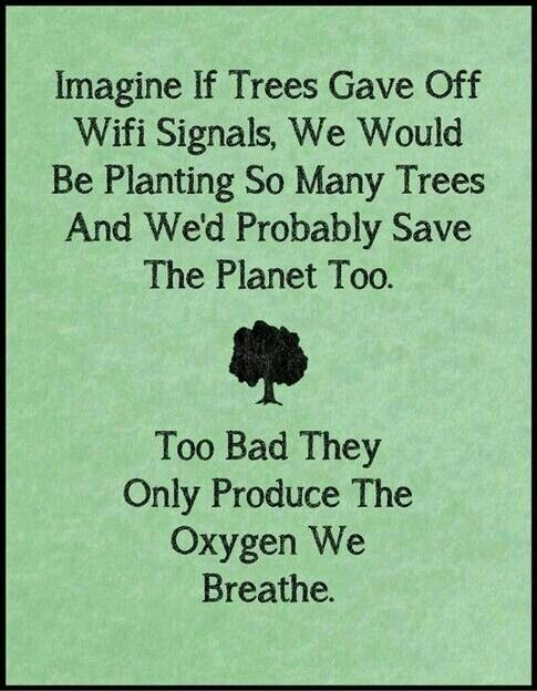 Plant More Trees And Save Our Dear Mother Earth Important Issues