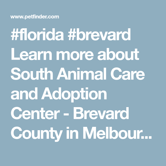Get To Know South Animal Care And Adoption Center Brevard County Pet Care Adoption Center Brevard County