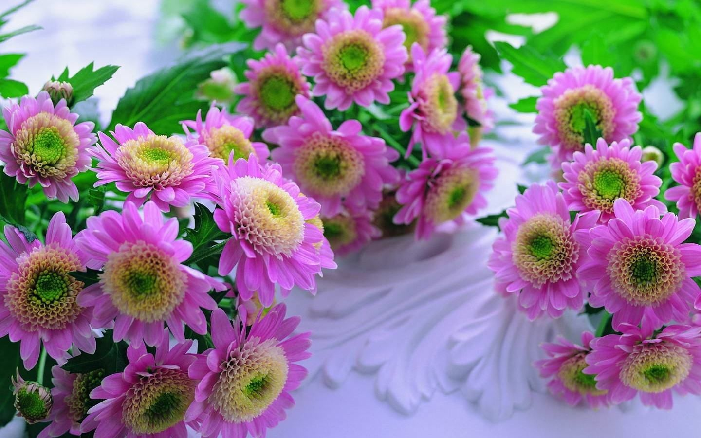 Flowers Background Pictures For Desktop Free Download HD