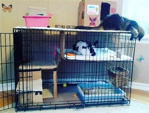 Great Way To Convert An Xl Dog Crate Into A Rabbit S Home Rabbit