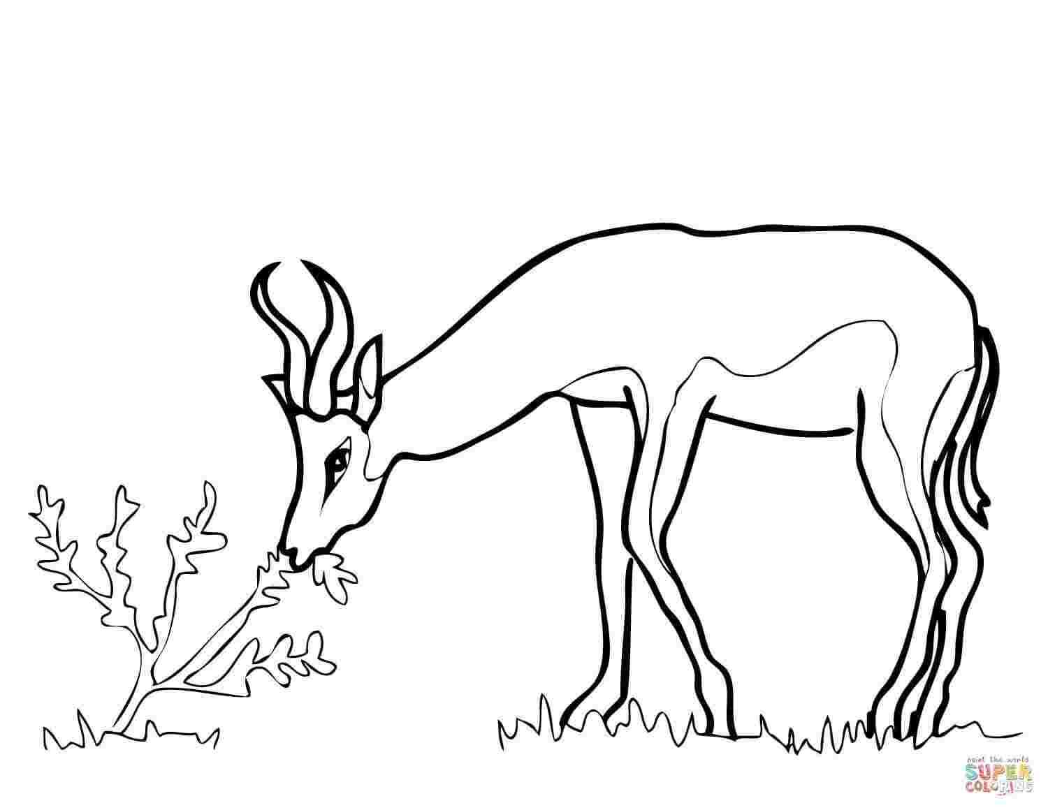 South African Coloring Pages In
