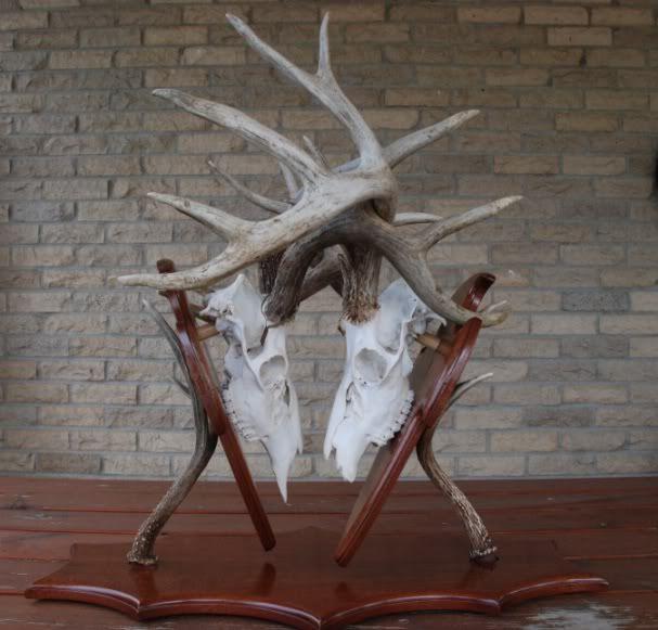 Cutting Skulls For Wall Mount Double Deer Mount Deer