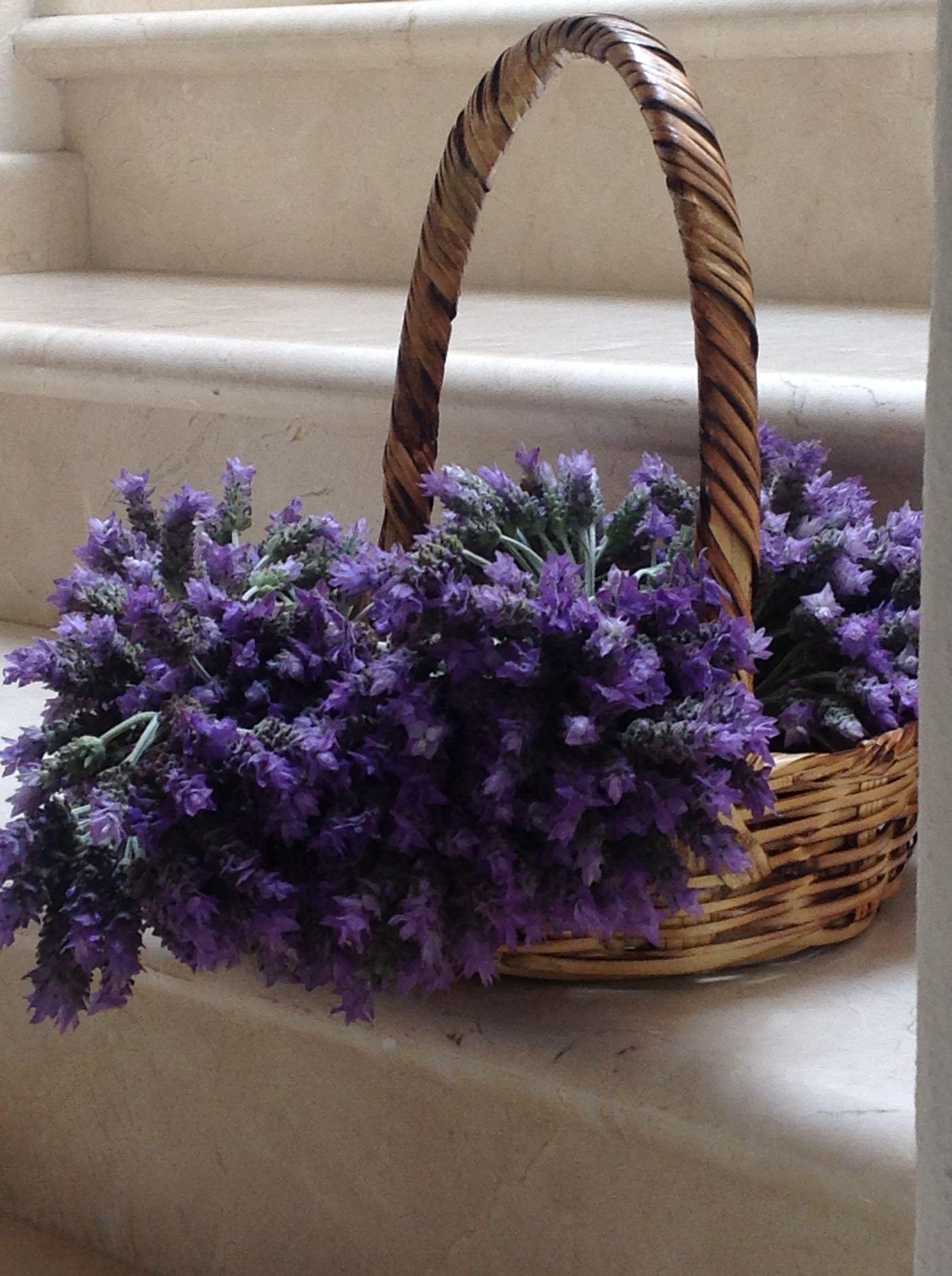 beautiful lavender Lavendel, Lavendelfelder, Blumenstrauß