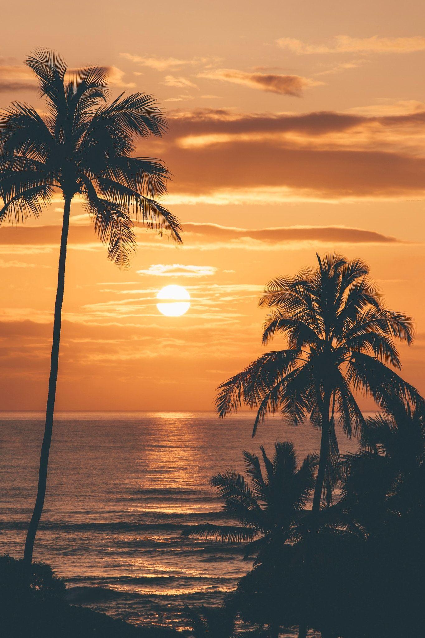 Sunrise In Kauai Tree Silhouette Sunset Beautiful