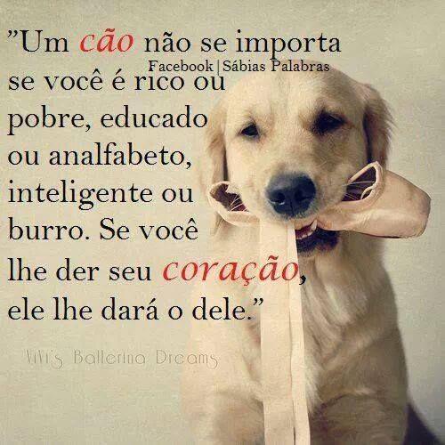 um cão não se importa se você é rico ou pobre, educado  ou analfabeto, inteligente ou burro. se você lhe der seu coração, ele lhe dará o dele.