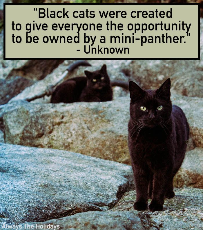 Black Cat Quotes The Best Quotes To Celebrate Black Cats In 2020 Black Cat Quotes Cat Quotes Black Cat Appreciation Day
