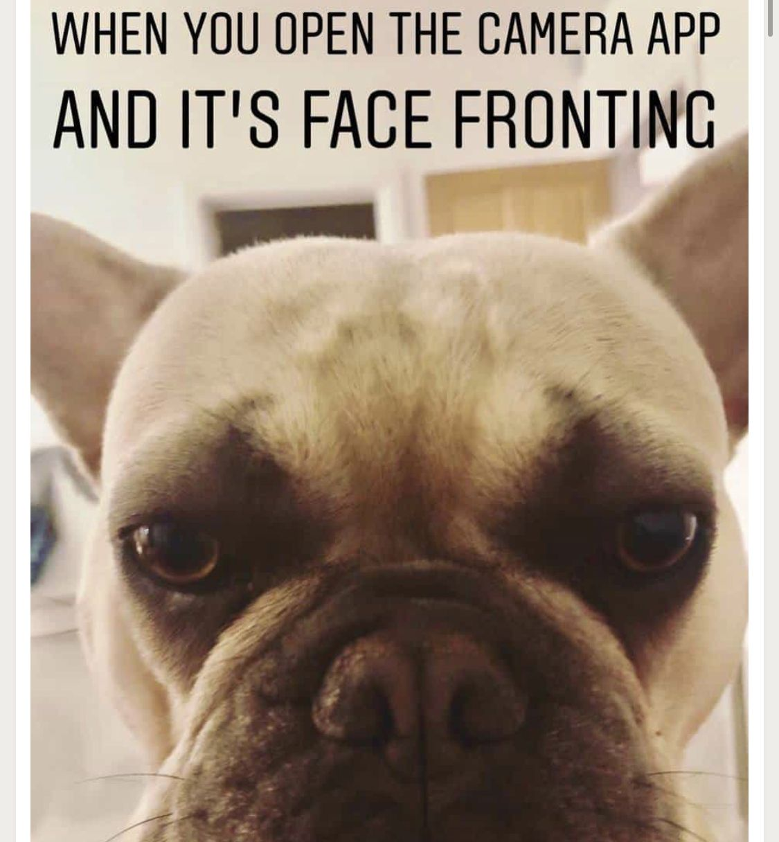 When You Open The Camera App And It S Face Fronting French Bulldog Funny French Bulldog Bulldog