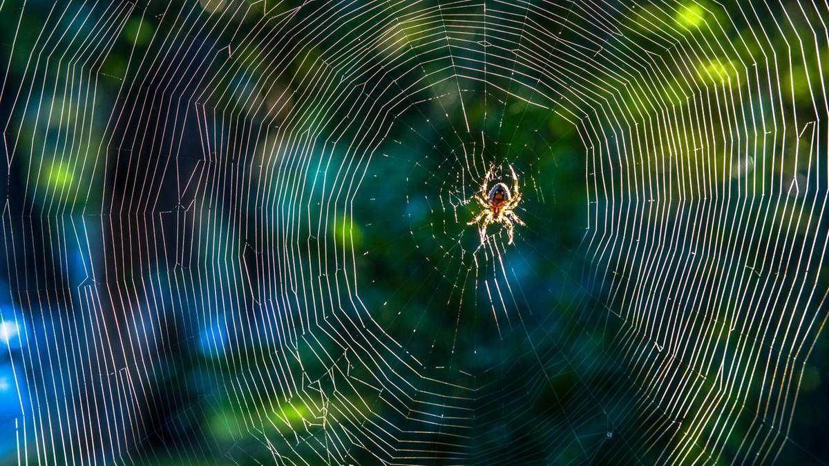 Spinnen fernhalten: Mit dieser Pflanze kommen Spinnen nicht in die Wohnung | STERN.de