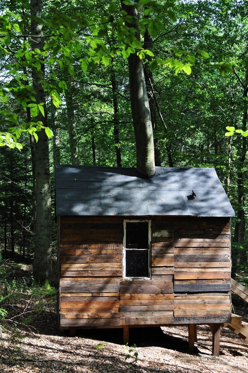 Small Wooden Shed. Attached To A Tree For Additional Strength.