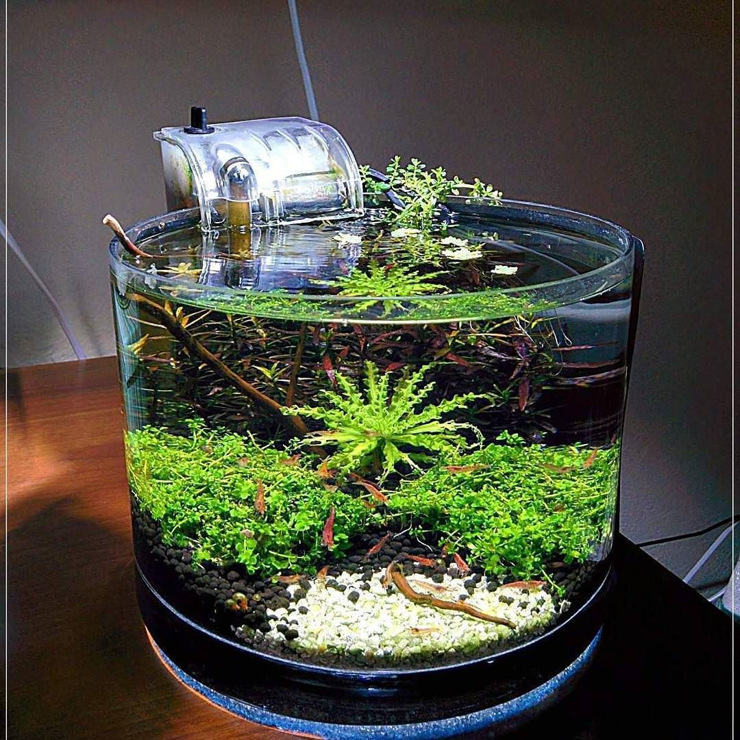 Thinking Outside Of The Traditional Cube Or Rectangular Shaped External Filter Aquascape Aquariums Can Result In Incredible Water Creations