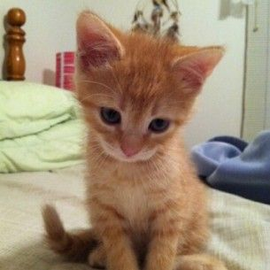 Animals Most Recent Orange Tabby Cats Cute Cats And Kittens Cute Cats