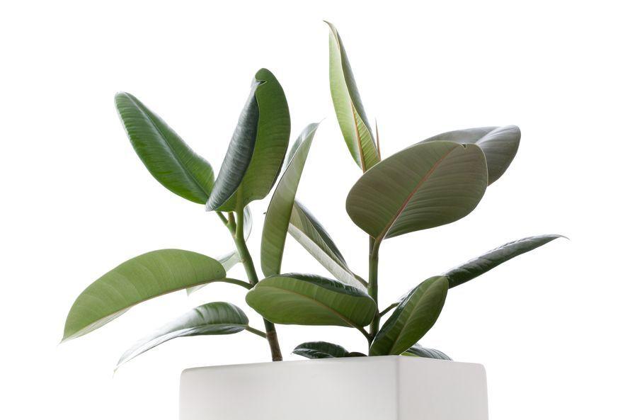 6 trendikästä huonekasvia, jotka parantavat sisäilmaa | Me Naiset