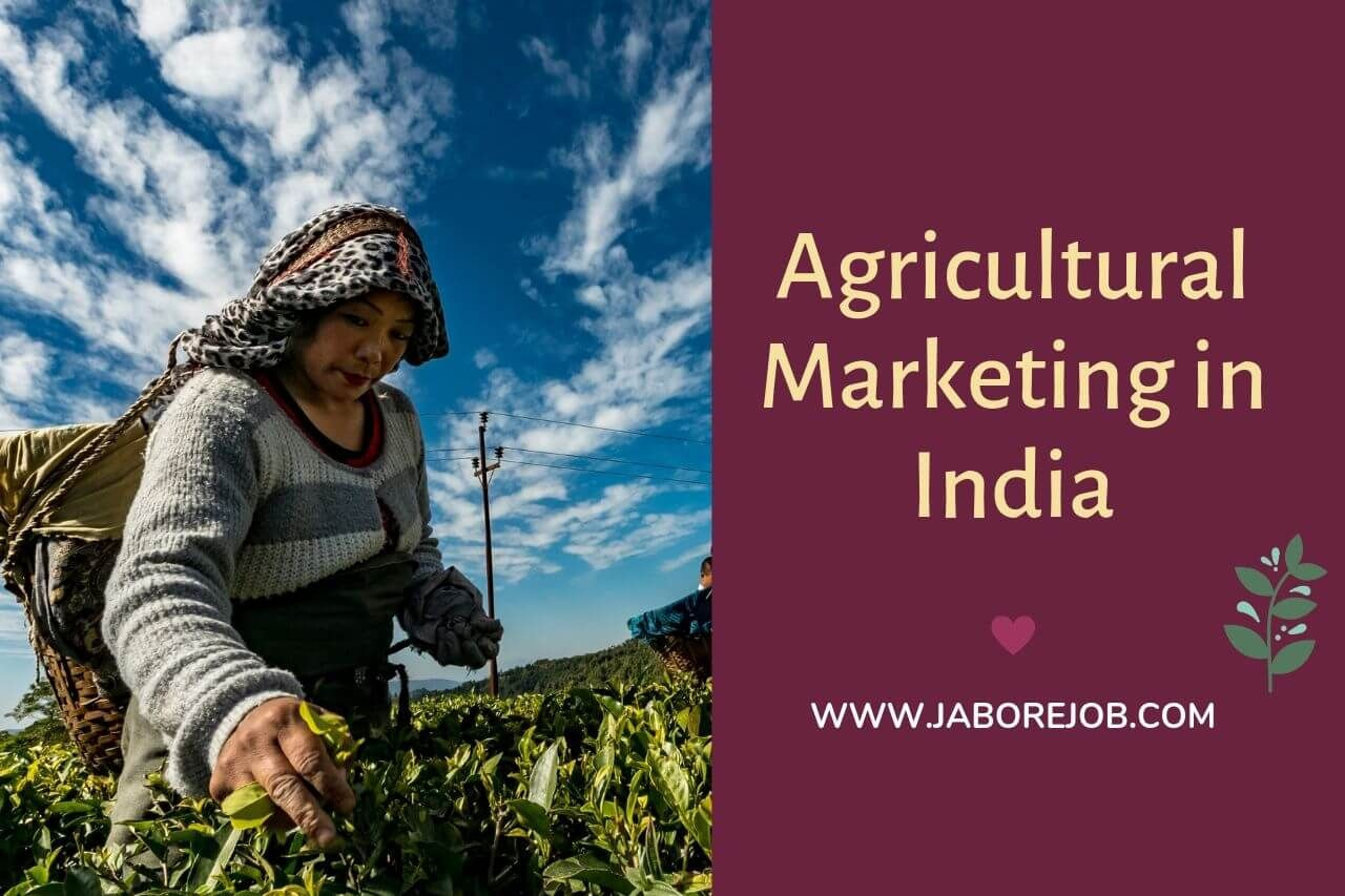 Importance of Agricultural Marketing in India and