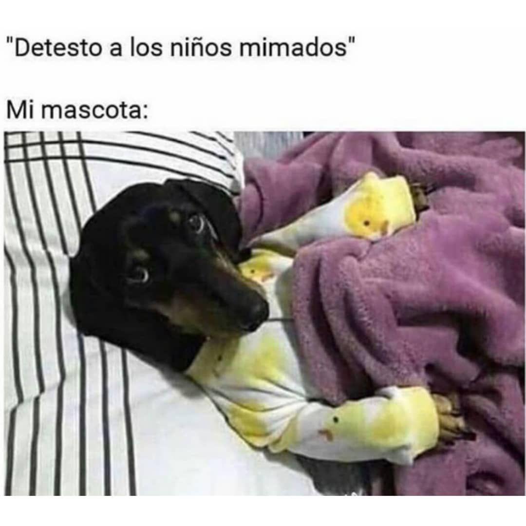 Pin De Samuel Mendoza En Memes Random Muy Divertidos Y Graciosos Para Ti Fotos Durmiendo Memes Nuevos Animales Durmiendo