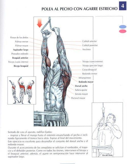 Circuito Espalda Hombro Y Triceps
