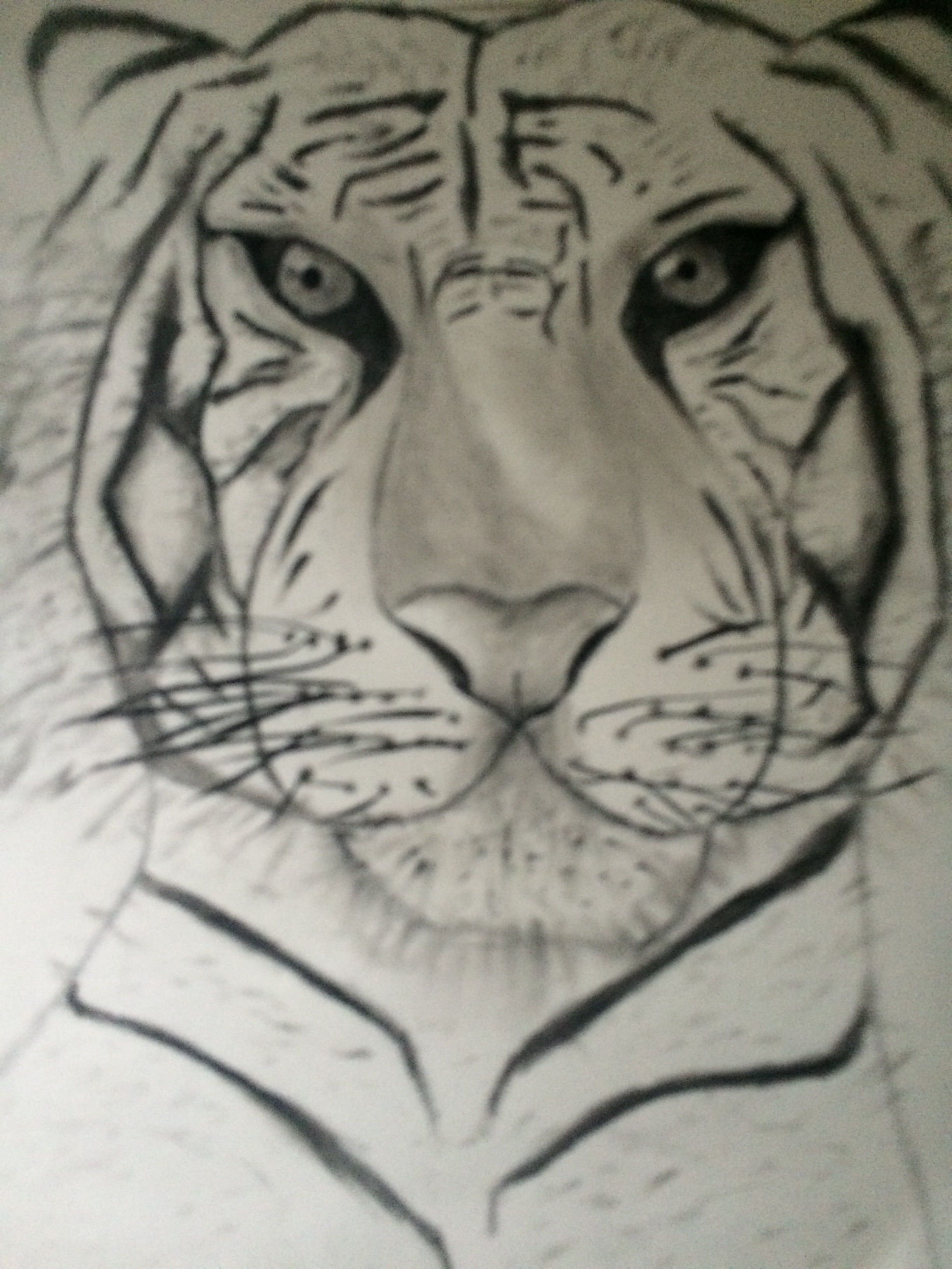 Tigre Blanc Dessin Pinterest