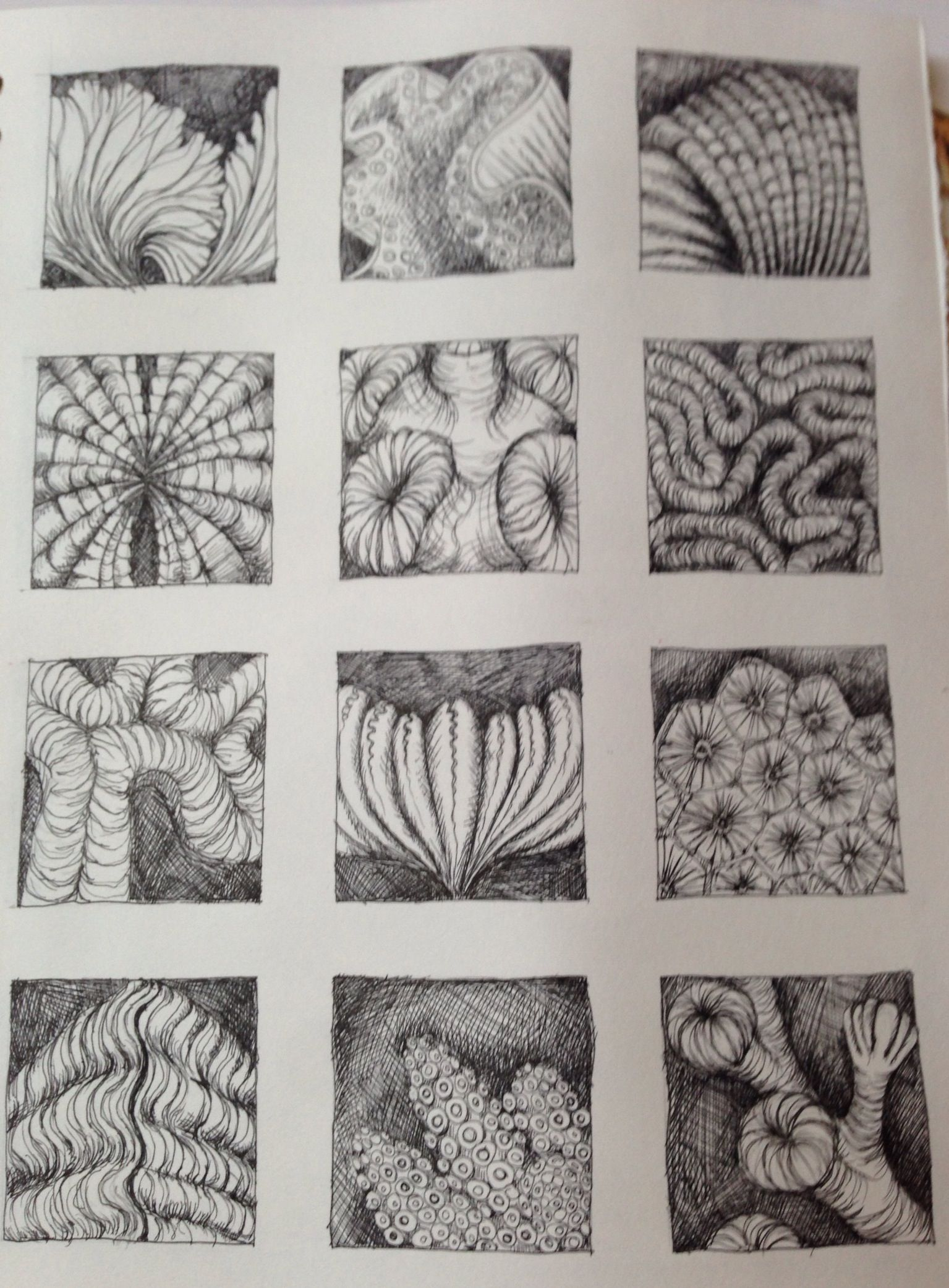 Form In Art And Design : Pen drawing of natural forms inspired by ernst haeckel