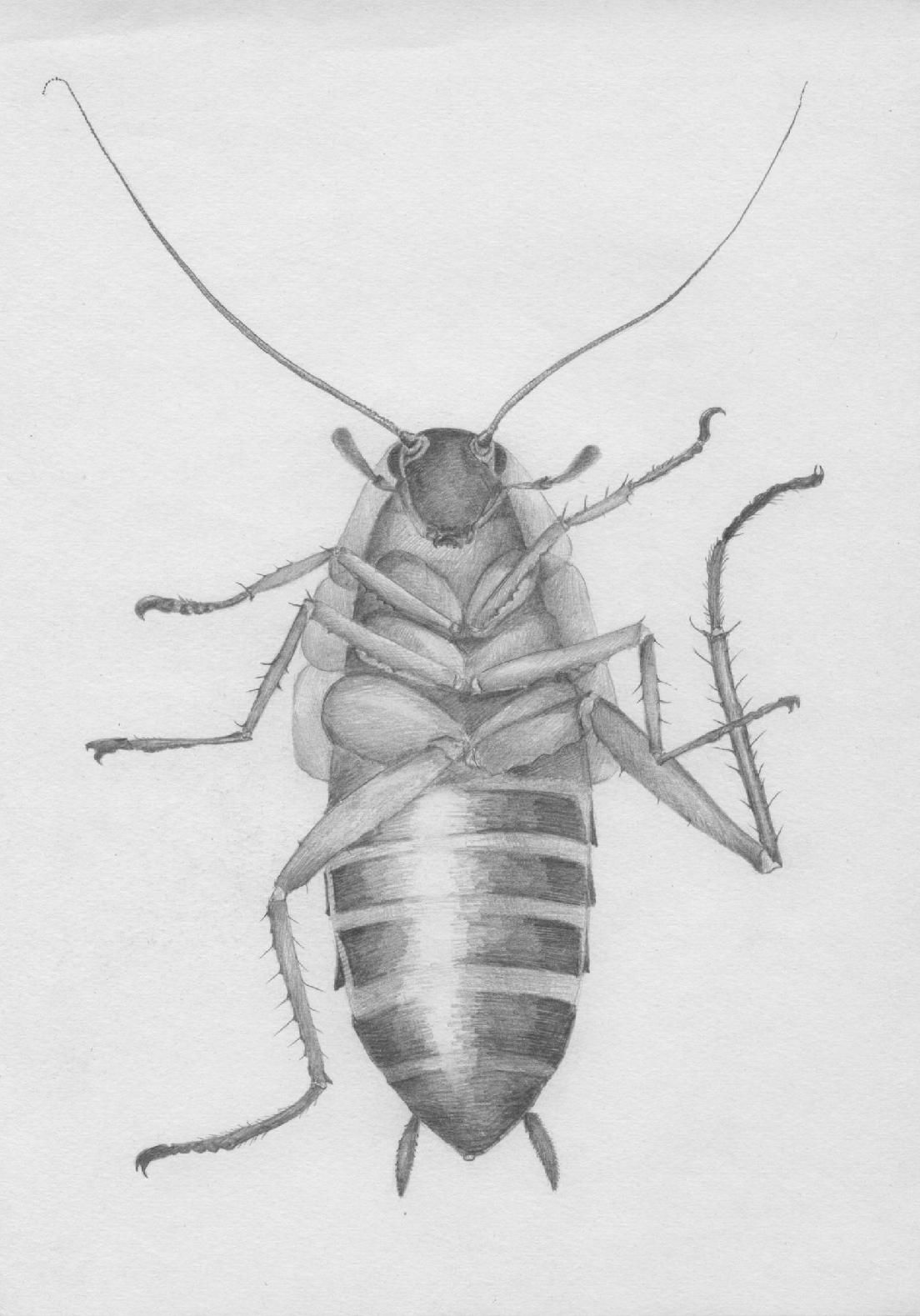 cockroach | Denas | Pinterest | Artsy and Illustrations
