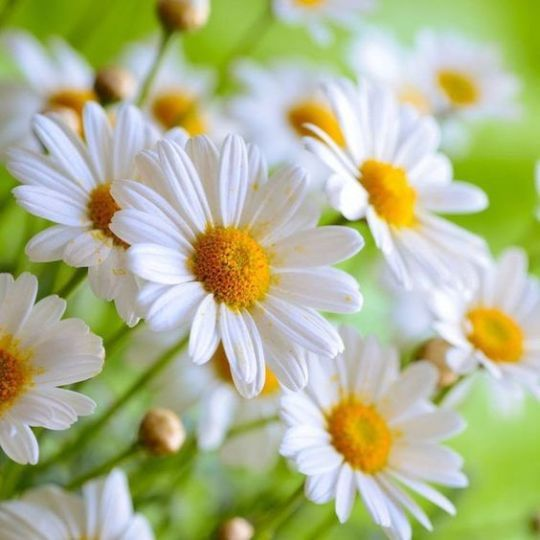 wunderschöne Landschaften und Blumen