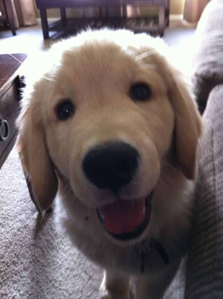 How can you say no to this face...