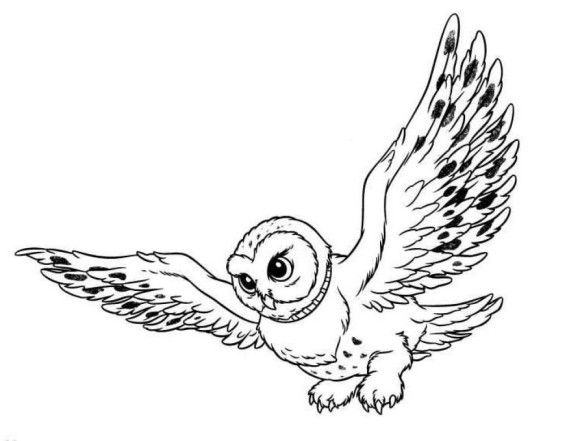 Snowy Owl Coloring Pages For Kids | 00 | Pinterest | Snowy owl, Owl ...