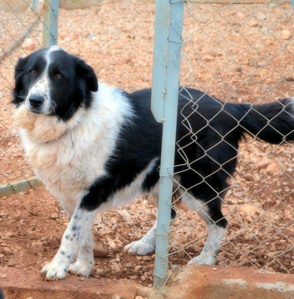 2017 04 19 Nora 3 Tiere Suchen Ein Zuhause Tierheim Hunde Tierschutz Hunde
