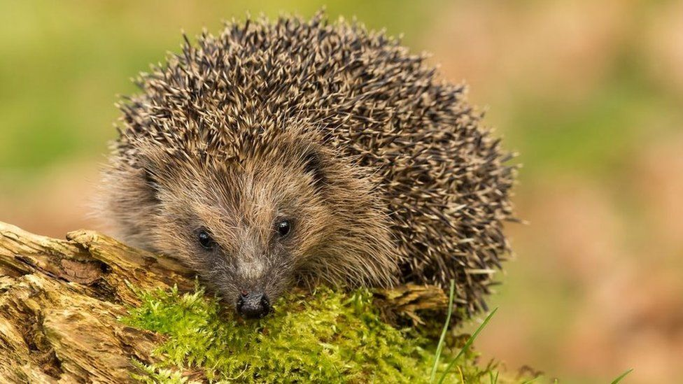 Chester Zoo Opens New Wildlife Reserve Forest Creatures Chester