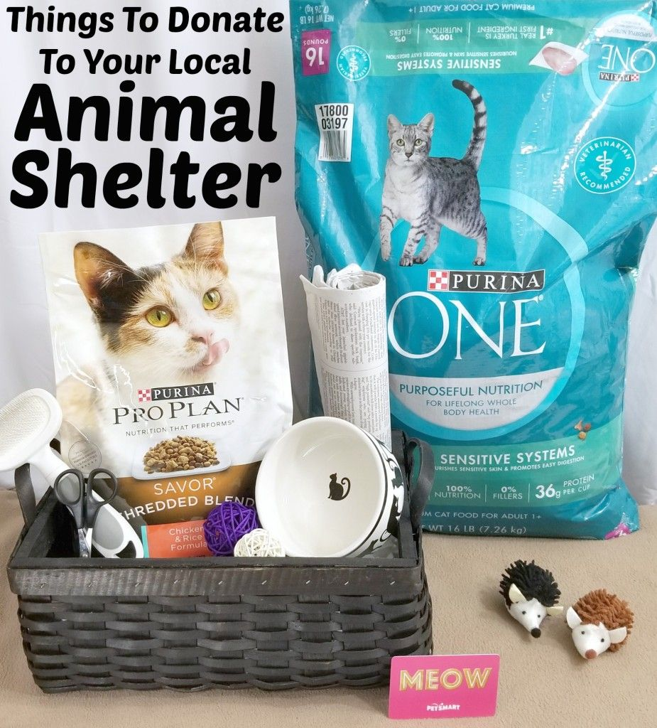 Things To Donate To Your Local Animal Shelter Animal
