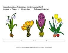 frühblüher-beschriften-1.pdf | sachunterricht grundschule, ostern klasse 1 und schule
