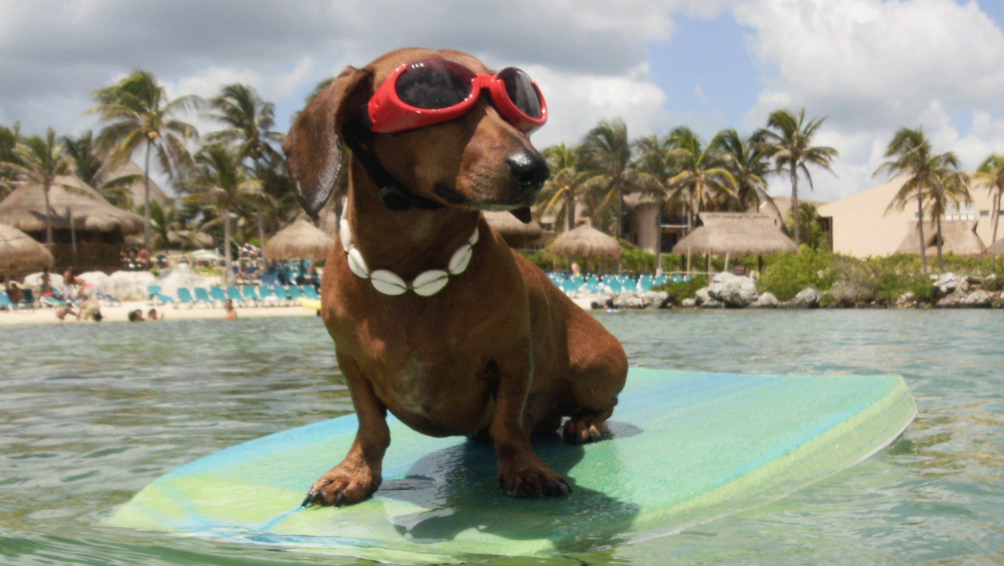 Hheheheheheeh Dachshund Love Weenie Dogs Dachshund