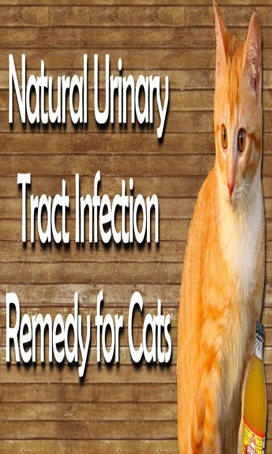 Natural Remedies for Cat Urinary Tract Infections Cat