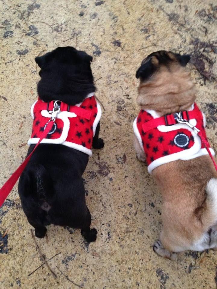 Puppia Stellar Harness Jackets At Www Ilovepugs Co Uk Post