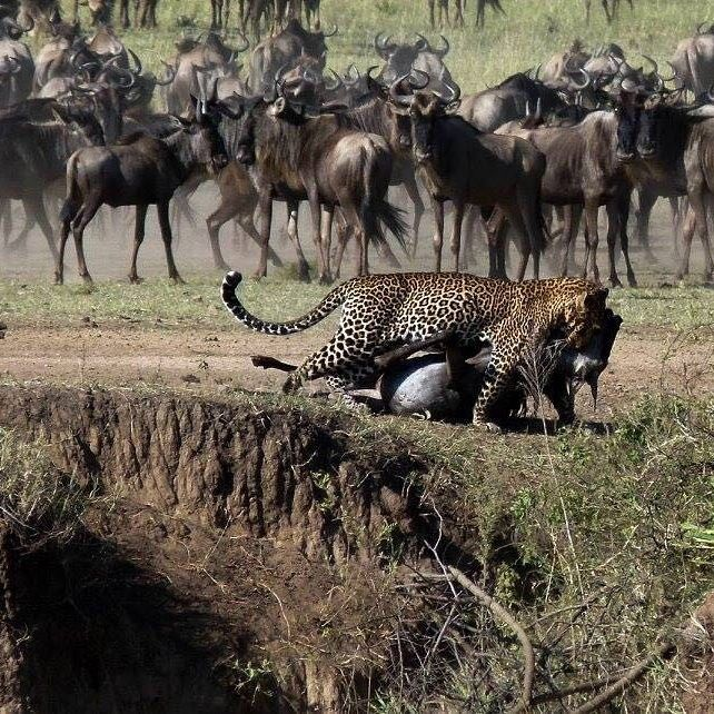 Explore the Entire Tanzania From Moonlight Tours