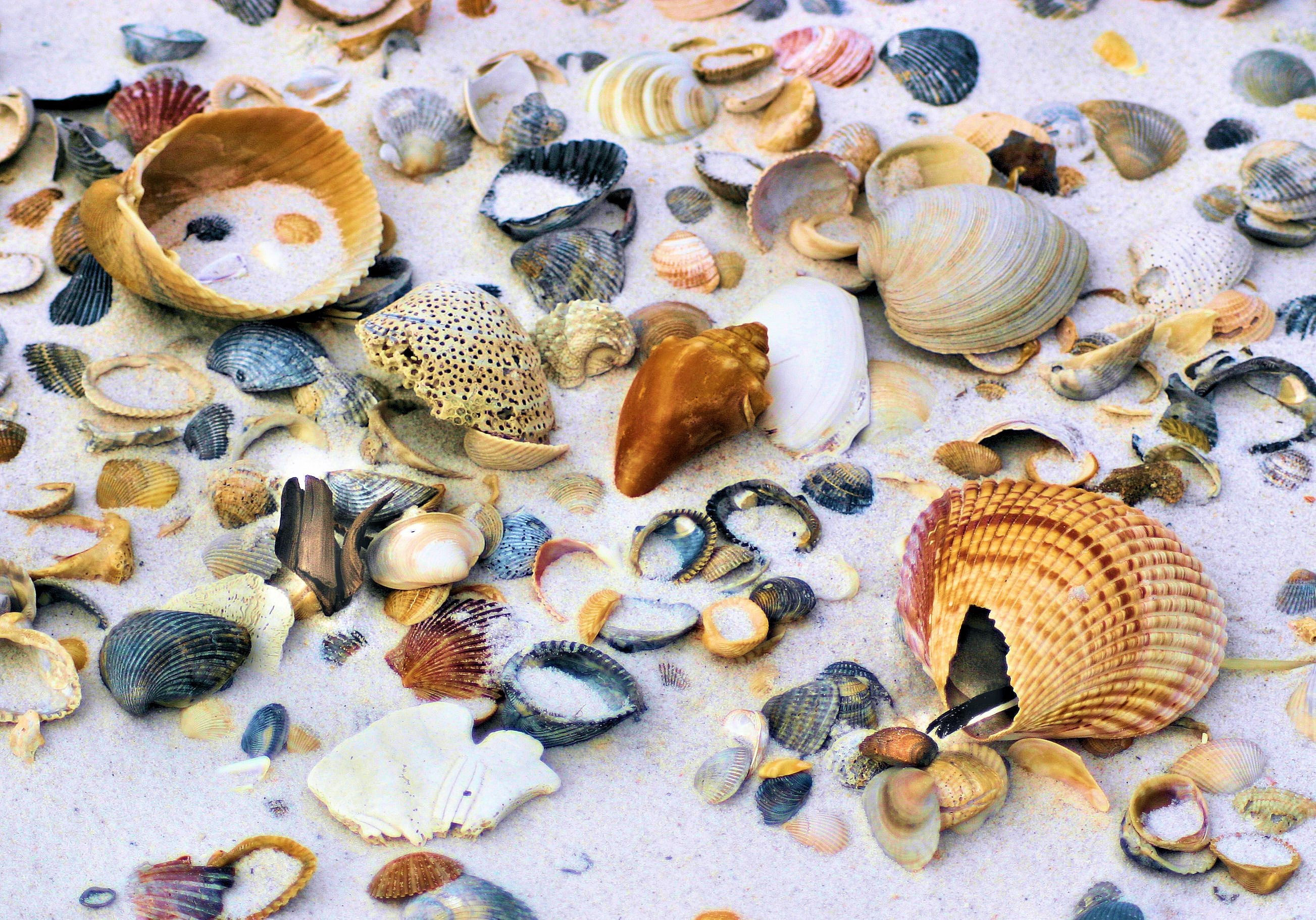 Sea shells are the best souvenirs. Start collecting at Perdido Key State Park in Pensacola, Florida.