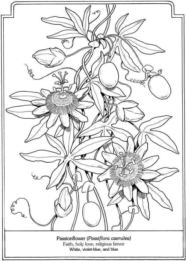 Free Coloring Page Passionflower Dover Publications