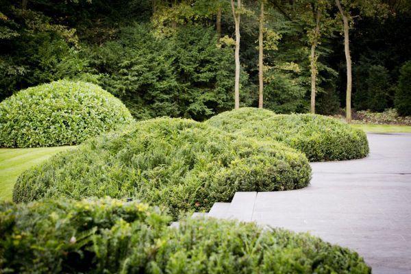 Werk van meker tuinen hedges and topiary pinterest landscape