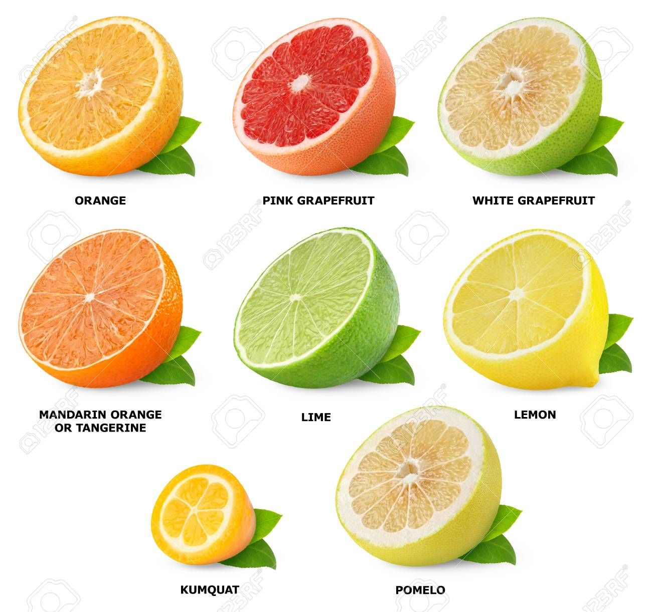 Collection of citrus fruits isolated on white citrus