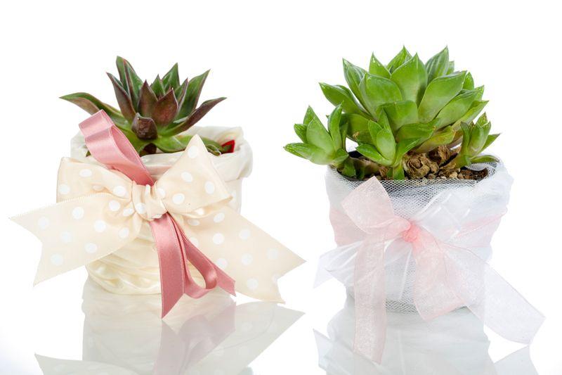 Bomboniere con piante grasse bomboniere macetas for Giardini decorati