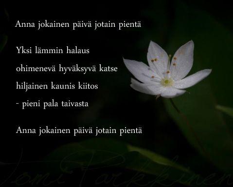 Runoja Kesästä