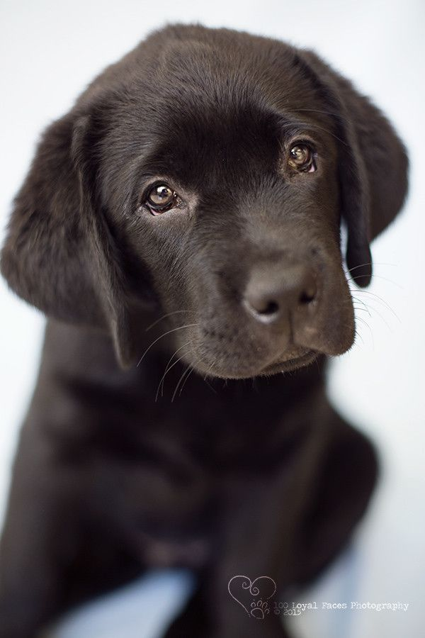 How To Photograph A Black Dog Perth Pet Photographer Welpen