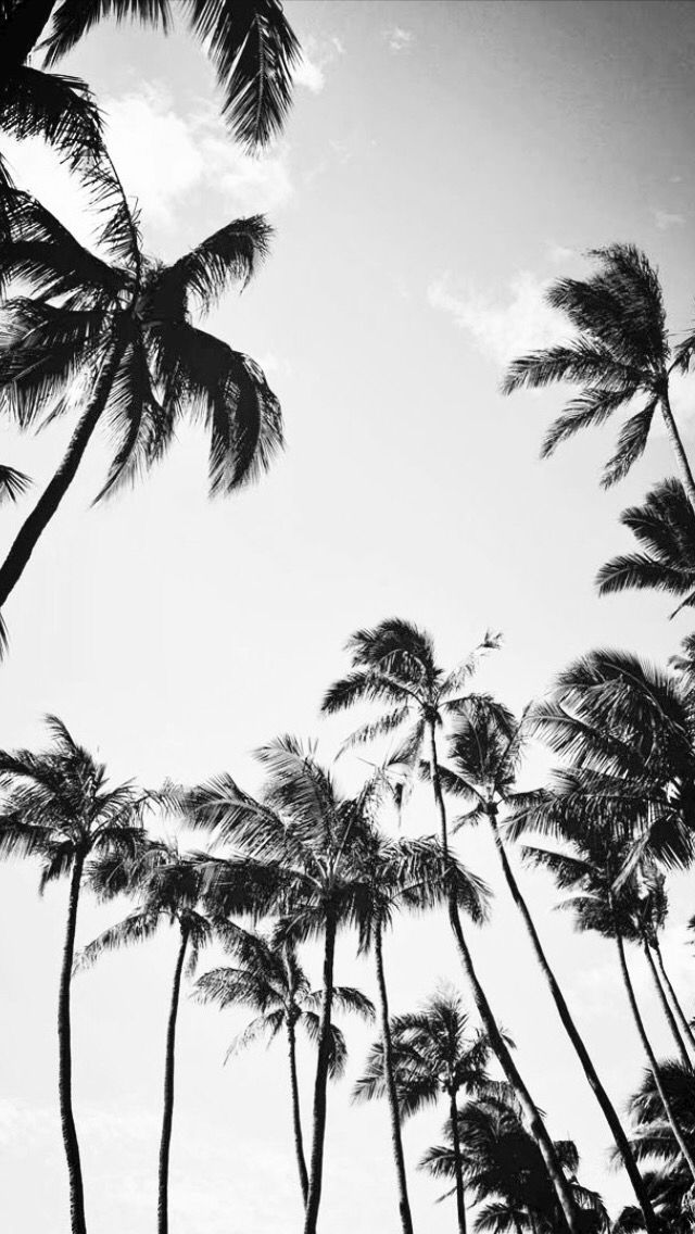 aesthetic black and white palm tree wallpaper,