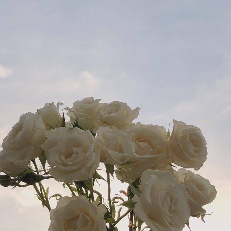 #minimalism #aesthetic #flowers #minimal #bambi #theme # ...