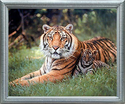 Tiger and cubs wildlife animal nature wall decor contemporary black framed art print picture