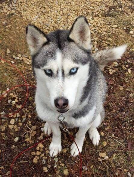Lostdog 12 16 15 Rockford Il Kelley Rd Fisk Ave Titan