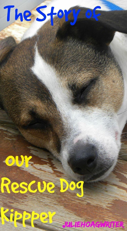 Our Rescue Dog Kipper