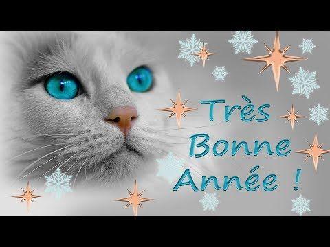 Carte de vœux - Bonne année 2020 - Chats chatons
