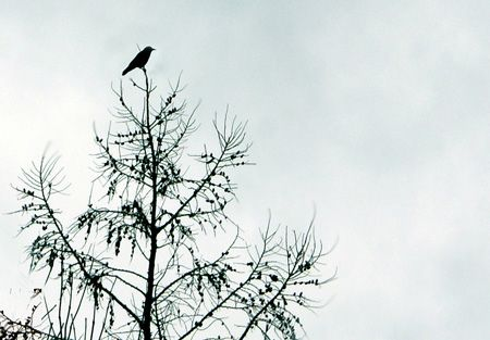 crow in dream