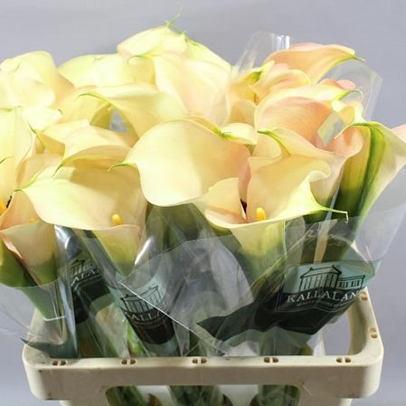 Calla Lily Bouquet Cream Calla Lilies Beargrass And Pearls Www Thelilylocket Co Uk Bridesmaid Flowers Calla Lily Bouquet Wedding Bouquets