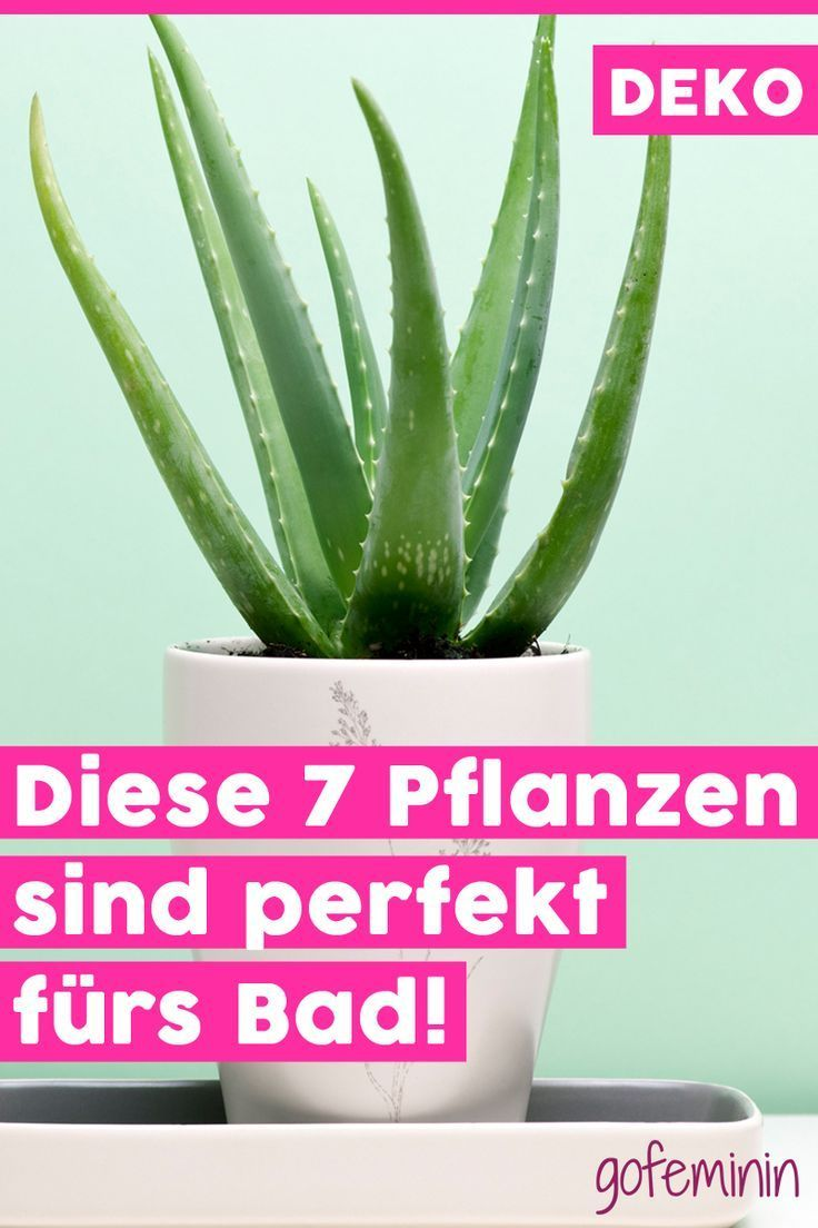 Pflanzen Machen Jeden Raum Wohnlicher Und Schoner Doch Nicht Jede Pflanze Fuh Pflanzen Im Badezimmer Wohnzimmer Pflanzen Schlafzimmer Pflanzen